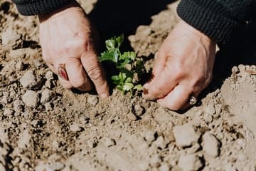 Manos sembrando una planta de Jardín ecológico