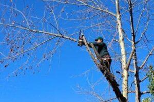 Podar o cortar los árboles