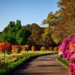 Cuidar tú jardín