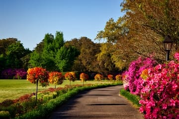 Jardín con un camino y árboles y flores hermosos representando a cuidar tú jardín