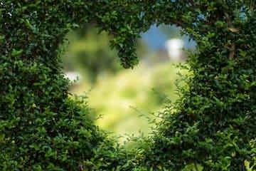 Setos recortados en forma de corazón representando nuestra página Prepara tu jardín para la primavera
